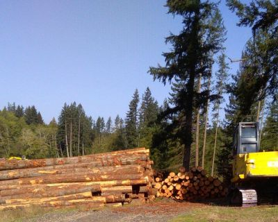 SELLING TIMBER, Port Orchard Washington TIMBER WANTED Logging, Forest Consulting
