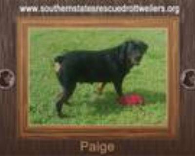 Adopt Paige a Rottweiler