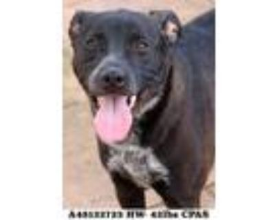 Pepper, Terrier (unknown Type, Small) For Adoption In Shreveport, Louisiana