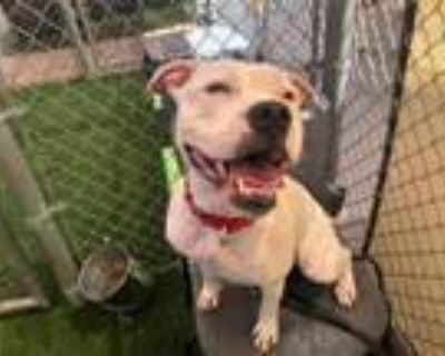 Adopt WAVEY a Boxer, Mixed Breed