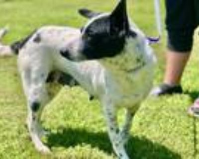 Quinn, Terrier (unknown Type, Small) For Adoption In New Iberia, Louisiana