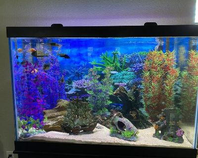 Fish tank and stand 65 gallon