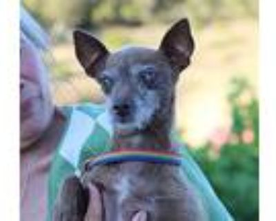 Dana, Terrier (unknown Type, Small) For Adoption In Creston, California