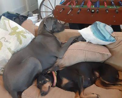 Dog boarding-Summer Reservations