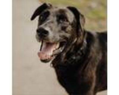 Adopt Rocky a Black Labrador Retriever / Mixed dog in Long Beach, CA (30537228)