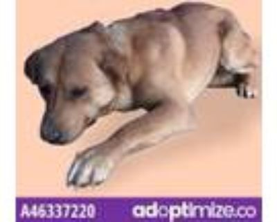 Adopt Piper a White Border Terrier / Mixed dog in El Paso, TX (31526161)