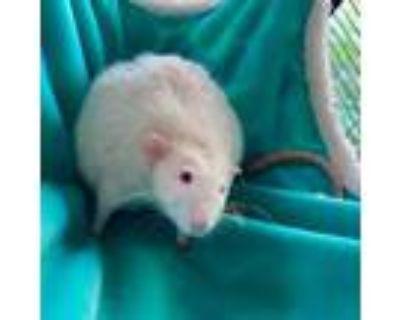 Adopt Jack a Rat