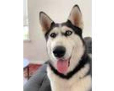 Adopt Kim Barker a Siberian Husky