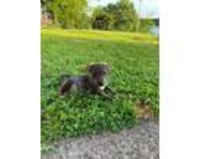 Adopt Huckleberry and a Mixed Breed