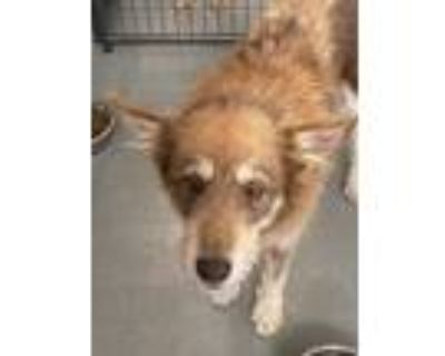 Adopt Lisbon a Terrier (Unknown Type, Small) / Mixed dog in Fort Lupton