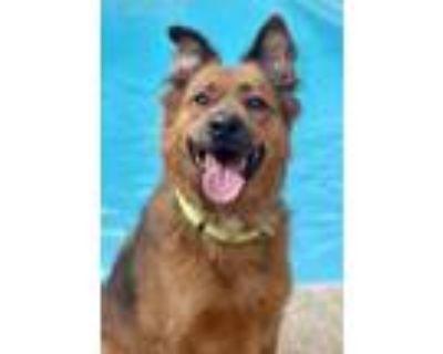 Adopt Bruh a Mixed Breed (Medium) dog in Atlanta, GA (32131031)