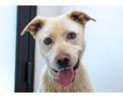 Adopt Roo Roo a Labrador Retriever, Mixed Breed