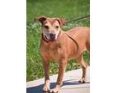 Adopt Lilly a Black and Tan Coonhound, Mixed Breed