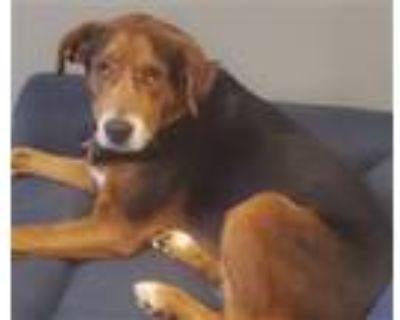 Adopt Bettie Paige (Riley) a Hound