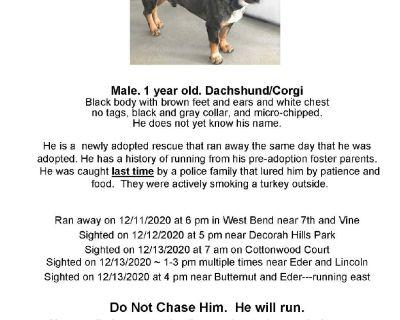 """Lost Run Away Dog : """"Corky"""""""