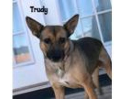 Adopt Miss Trudy (Hard Luck Hound) a Black - with Tan, Yellow or Fawn Pumi dog