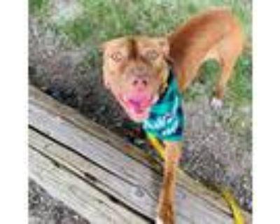 Adopt Fallon Fae a Pit Bull Terrier
