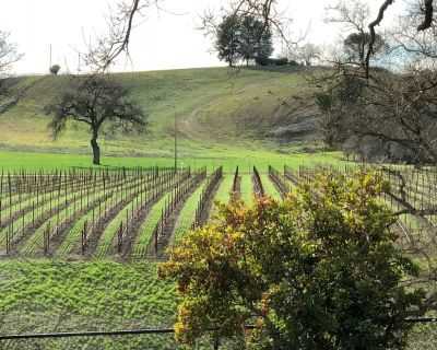 Vacation in the vineyard - Paso Robles