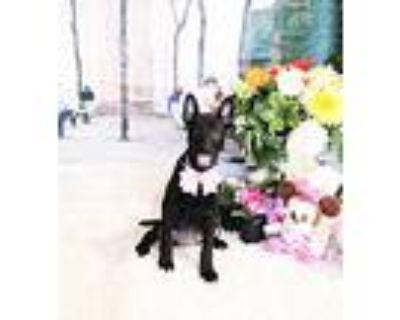 Bissta, Labrador Retriever For Adoption In Castro Valley, California