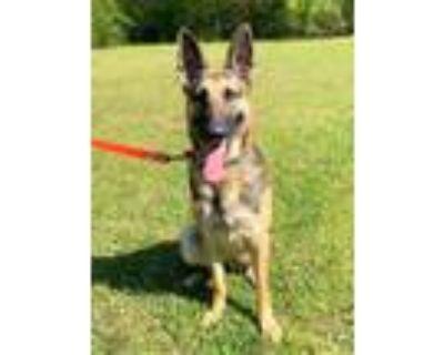 Adopt Nellie a German Shepherd Dog
