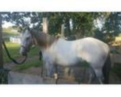 SOLDShimmer Dust- Quarter Horse Mare