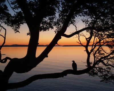 *OCEANFRONT*Spectacular180 degree views,Hot Tub ,Beach, Wineries,15 min-downtown - Cordova Bay