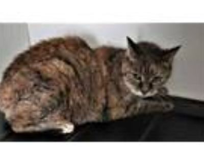 Adopt Bunny a Orange or Red Domestic Shorthair / Domestic Shorthair / Mixed cat