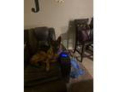 Adopt Pearl a Black - with Tan, Yellow or Fawn German Shepherd Dog dog in Huber