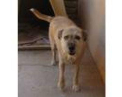 Adopt Tucker-similar to Chet a Terrier