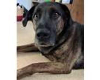 Adopt Mako a Black Plott Hound / Retriever (Unknown Type) / Mixed dog in