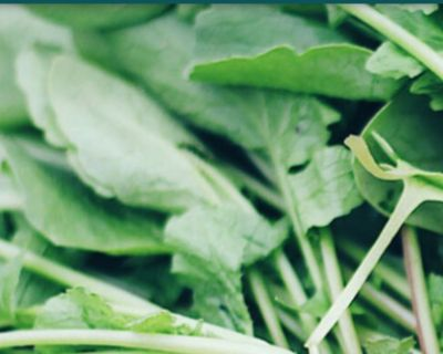 Free: Fresh organic radish leaves for your rabbits, guinea pigs, chickens or for yourself for soup. Cook St. Village location.