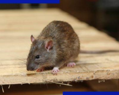 Rodent Control in Atlanta