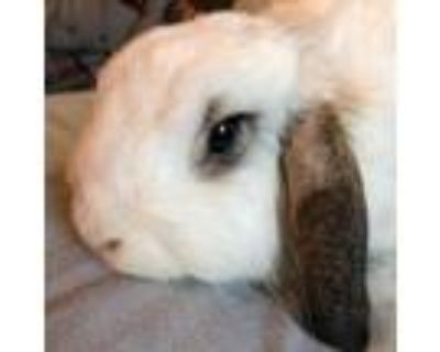 Adopt Sonny a American Fuzzy Lop