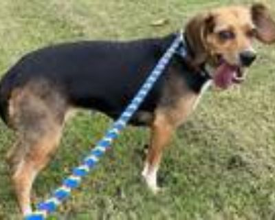 Adopt Dh-14 a Beagle