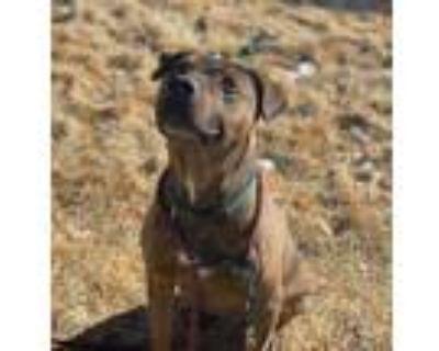 Adopt Tigger a Mixed Breed (Medium) / Mixed dog in Park City, UT (30659296)
