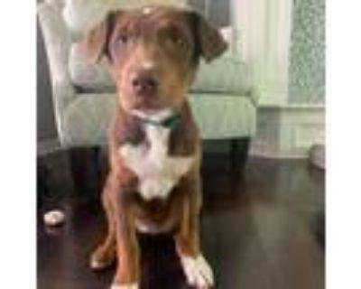 Adopt Pacific Ocean a Black Border Collie / Mixed dog in Shawnee, KS (31677121)