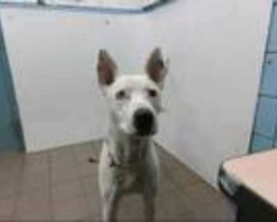 Adopt MULE a White - with Black Dalmatian / Mixed dog in Albuquerque