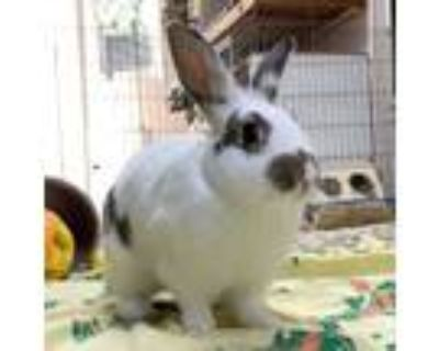Adopt Selby a Bunny Rabbit