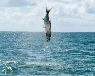 The Fish Charters That Will Exceed Your Expectations