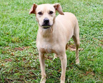 Sleepy 9726 - Dachshund/Terrier, Jack Russell - Adult Female