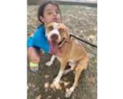 Adopt Finn a Pit Bull Terrier / Mixed dog in Little Rock, AR (32140622)