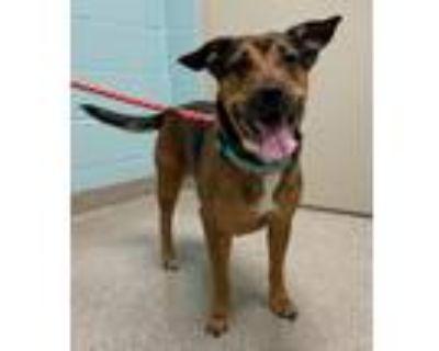 Adopt Mocha a Rottweiler, Shar-Pei