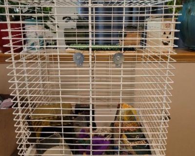 Cockatiel bird cage and stand