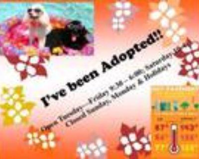 Adopt JUSTIN a German Shepherd Dog
