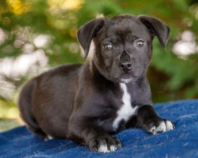 Gianna 11101 - Mixed Breed (Large) - Puppy Female