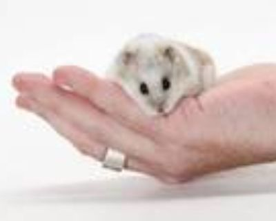 Adopt NONE a Hamster