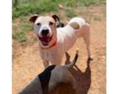 Rowan, Terrier (unknown Type, Medium) For Adoption In Oklahoma City, Oklahoma