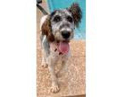 Adopt Mila a Labrador Retriever / Mixed dog in Atlanta, GA (32060757)