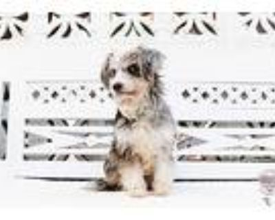 Ily, Terrier (unknown Type, Small) For Adoption In Inglewood, California