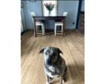 Adopt Chica a Brindle German Shepherd Dog / Mixed dog in Monroe Township